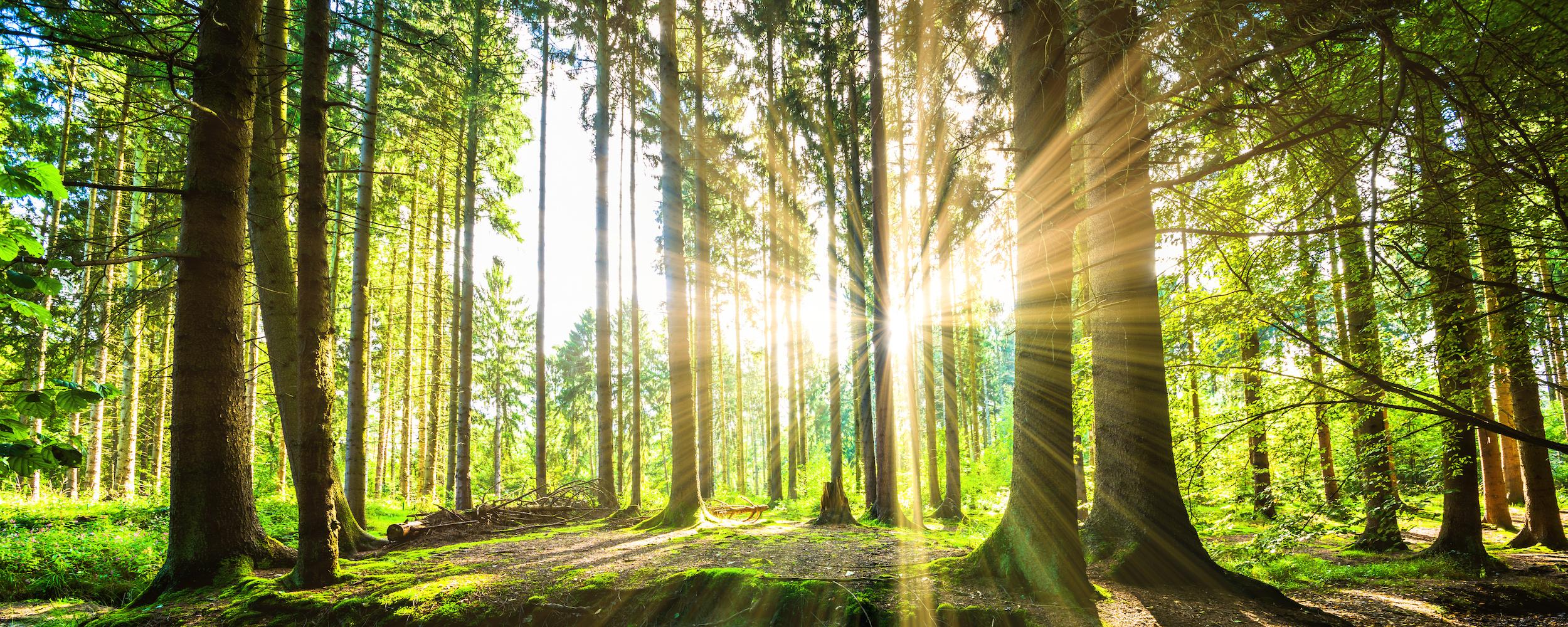 Naturbaustoffe sind unsere Zukunft